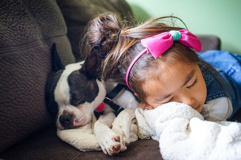 Dog and child napping together