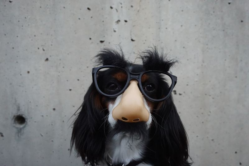 dog with disguise